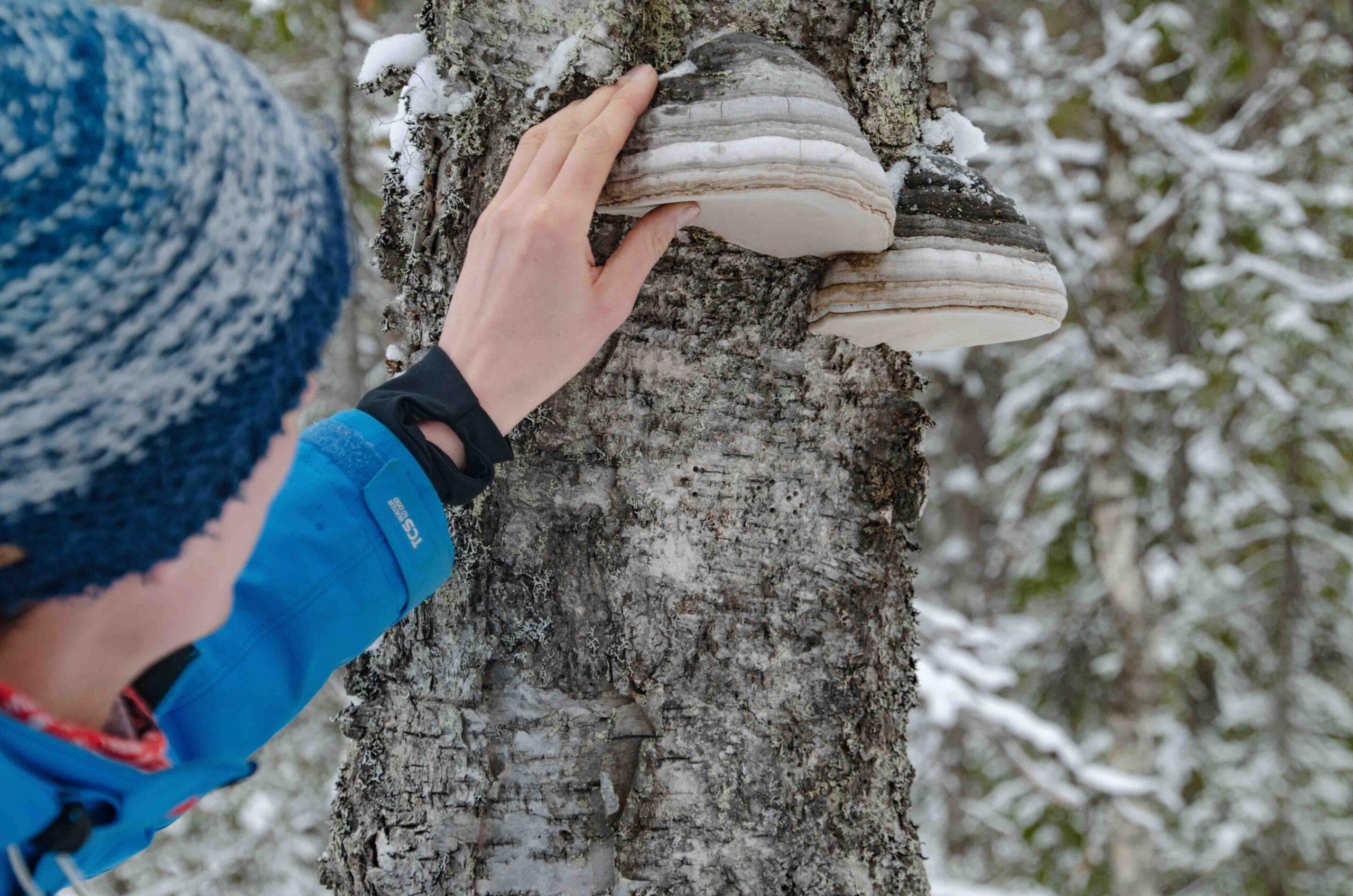 snowshoeing-rovaniemi