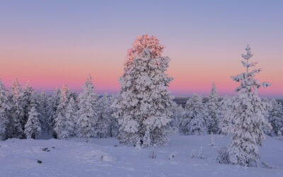 10 Things to do in Rovaniemi in Winter – 2021