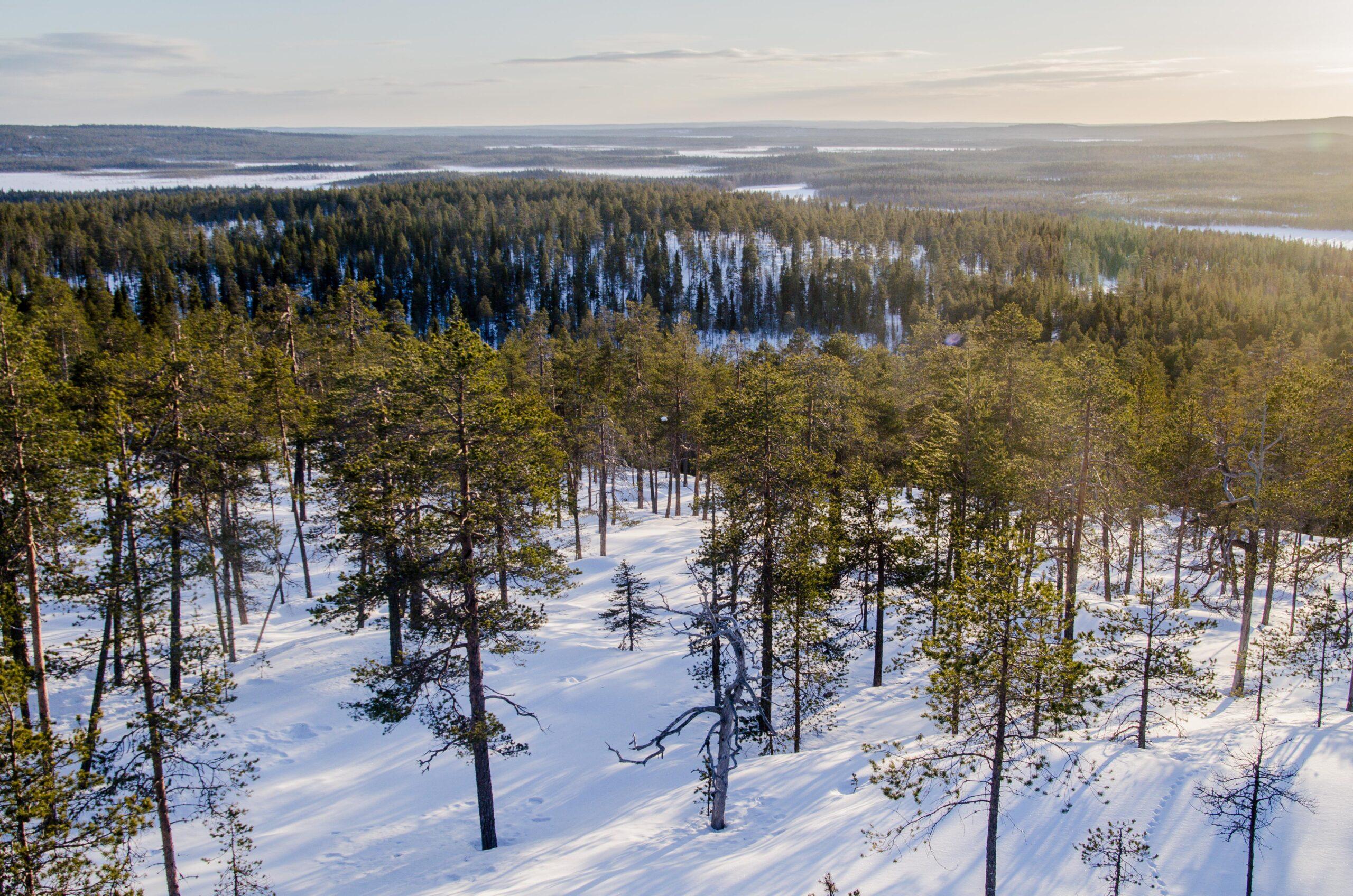 Rovaniemi hike nature